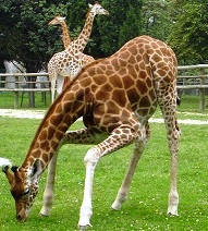 contact zoo paris