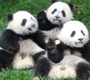 Zoo paris biologique